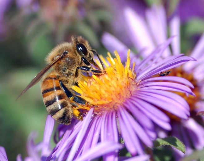 How Goldilocks Get Their Nectar