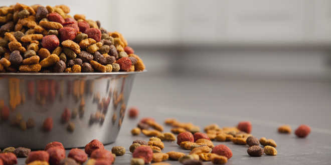 5 Things To Know About Pet Food