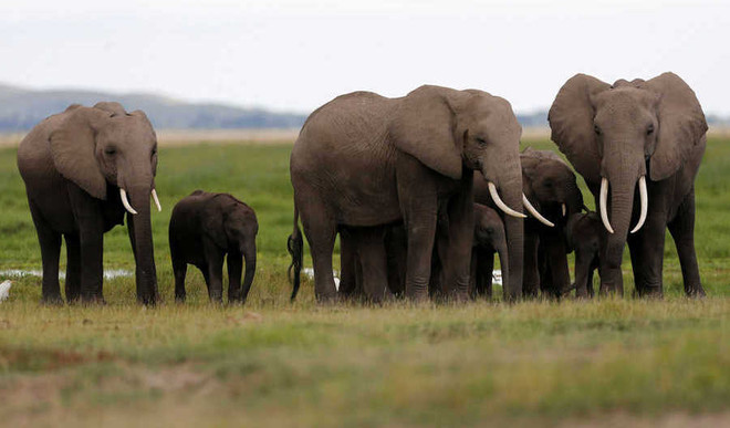 Environment News: Key Decisions From CITES