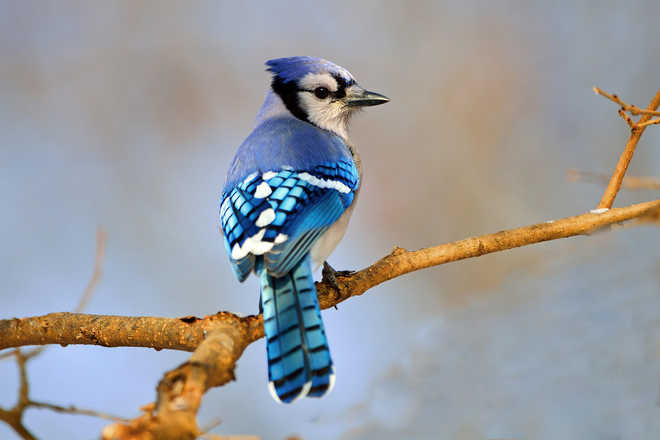 Nikhil Helps Birds During Diwali