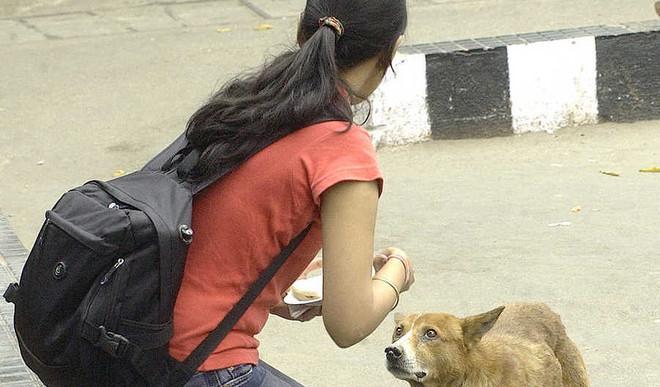 Kavisha P: If You Love Pets, Then Save Them