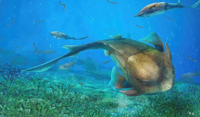 Found: Jaw Evolution Linked To Fish Fossil