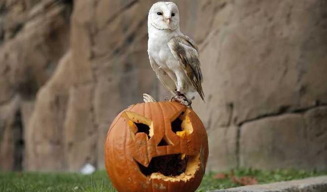 Why We Celebrate Halloween