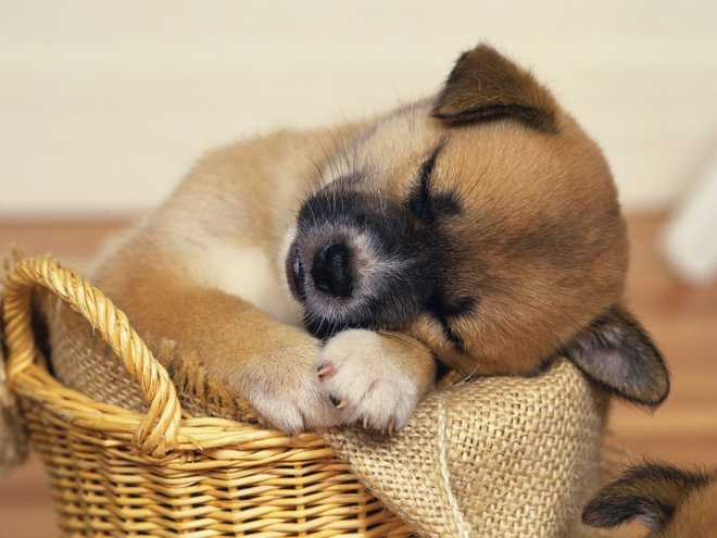 Your Pet Is Dreaming About You!