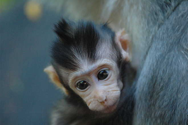 Infant monkeys smile in their sleep