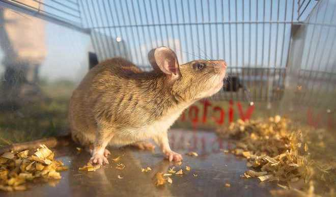 Ishika Jain: Animal Testing Is Not Justified