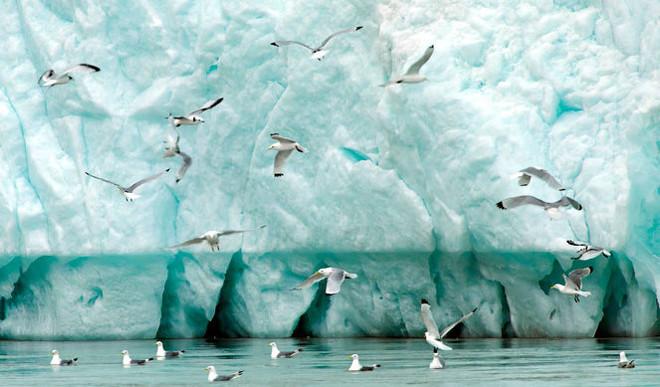 How Bird Poop Helps Keep The Arctic Cool