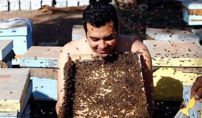 This Man Grows 'Beard of Bees'