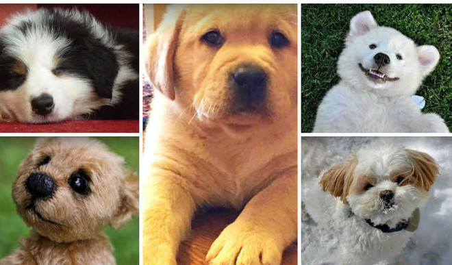 These 5 Pets Will Melt Your Heart