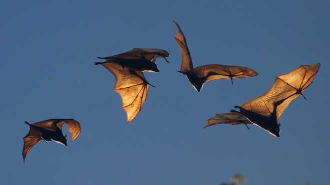 Do Bats Touch During Flight?