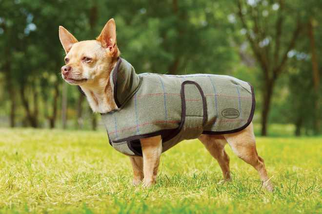 Winter Accessories For Pets