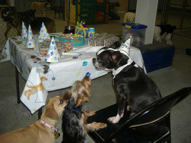 How To Throw A Party For Dogs?