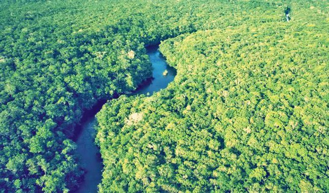 What Will Happen If The Amazon Rainforest Is Cut Down?