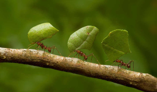 Can Ants Save Us From Global Warming?