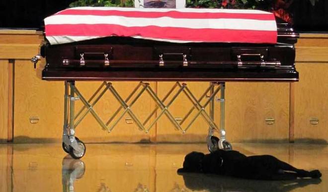 Dog Mourns at Casket of Navy SEAL