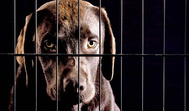 Stop Animal Cruelty Right Away! It's High Time!