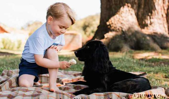Dog Lovers Are Friendlier: Study