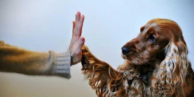 Pet Grooming Trends