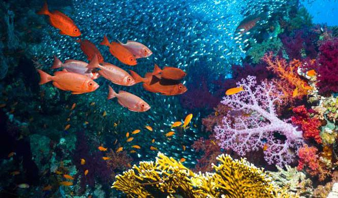 Why Coral Reefs Need Fish Pee To Thrive