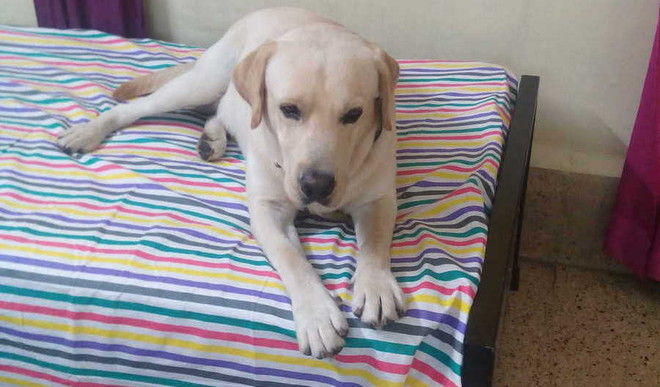 Aakarsh Bonds With His Pet