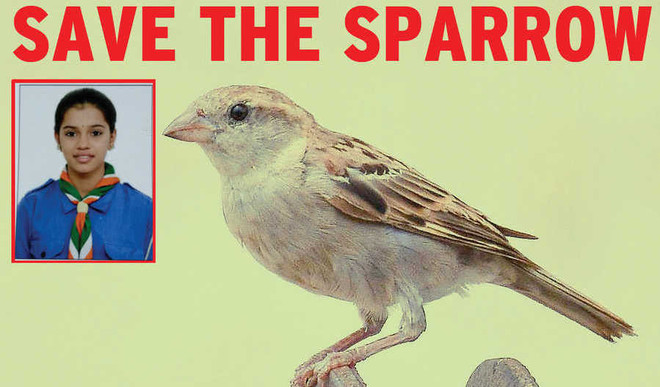 Kirthi Says If We Don't Act Now Sparrows Will Be Extinct