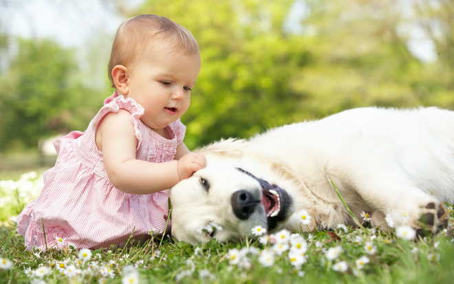 Babies And Pets Are Best Buddies
