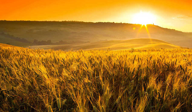 By 2070, Climate Change Will Wipe Out Cereals