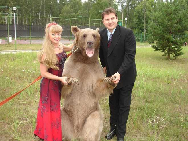 Meet Stepan, A 300 Kg Pet