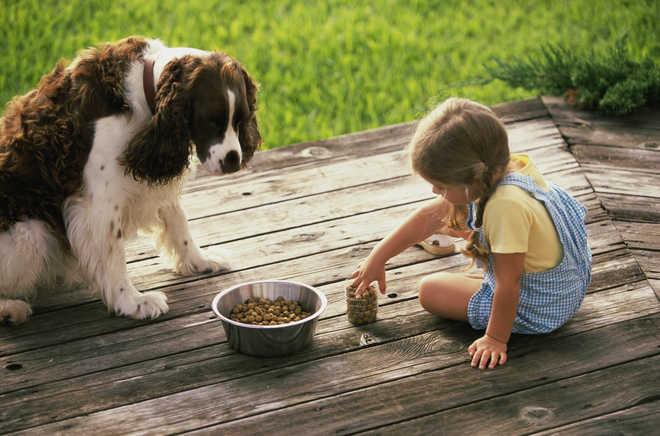 Pets Teach Responsibility