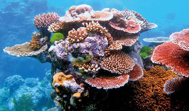 Corals Developing Taste For Plastics