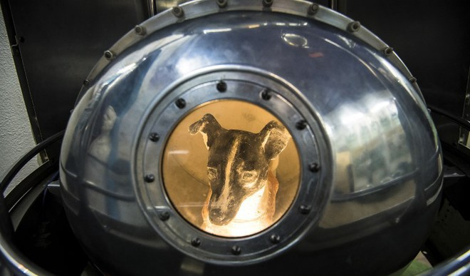 Scientist Recalls Training Dog Laika For Space