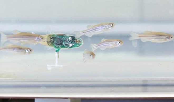 Robot That Can Spy On Fish Developed