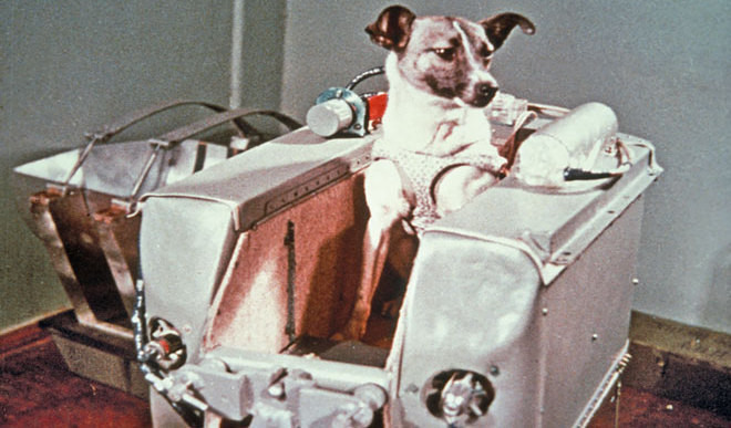 History Of Animals In Space