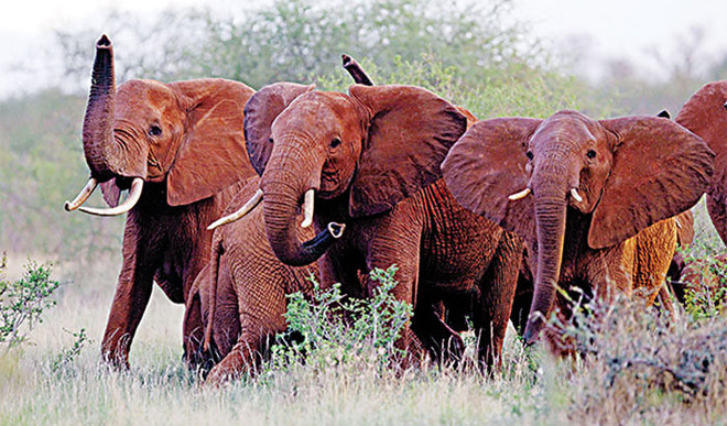 Disappointed with the Assam government for using captive elephants to demolish illegal settlements by encroachers in Amchang Wildlife Sanctuary, animal activists have called for banning such activity.