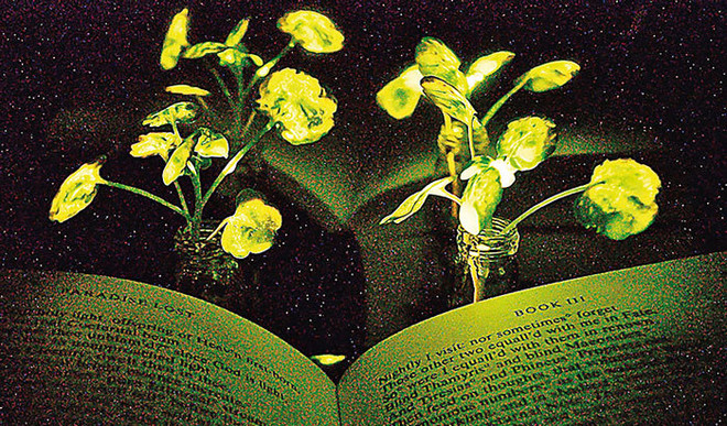 Plants That Can Glow