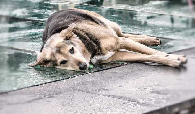 Should India ban euthanasia of animals in shelters?