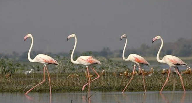Flamingo Boat ride, Thane Creek
