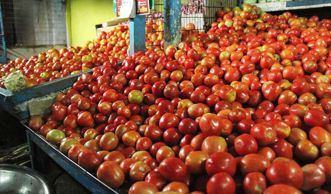 Waste Tomatoes To Make Car Tyres