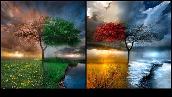 Life's Four Seasons