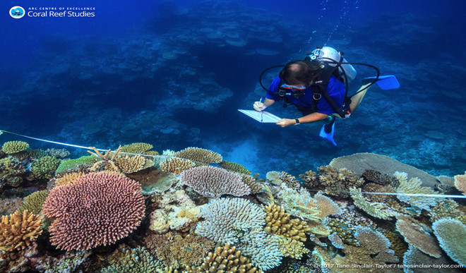 It's The Only Way To Save Great Barrier Reef