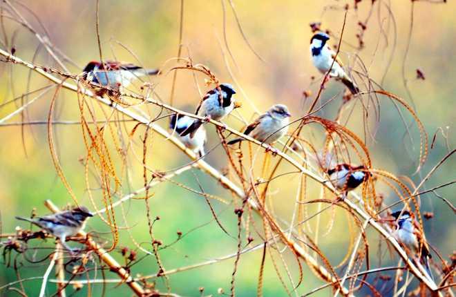Three-Day Sparrow Count Kicks Off At Nagpur
