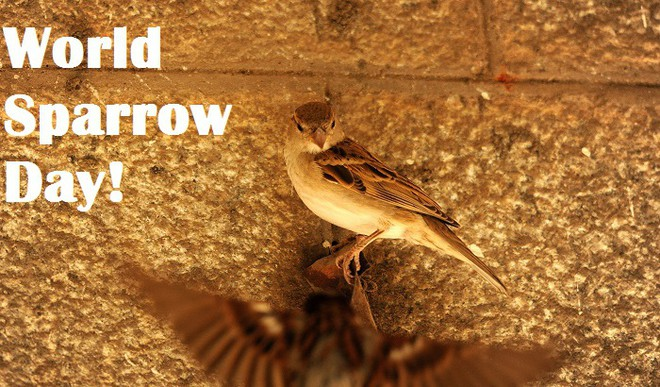 Where Have The Sparrows Disappeared?