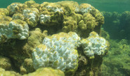 Mass Coral Die-Off In Asia