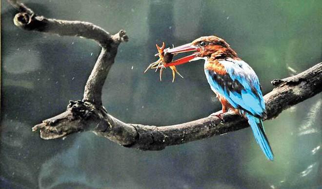 Rabia Khan: Conserve Wildlife