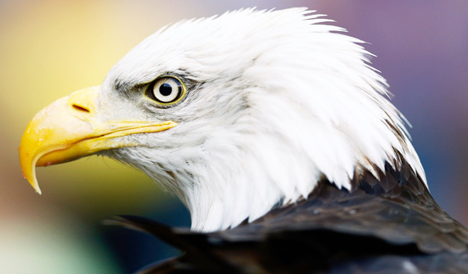 Video: Leadership Qualities Of An Eagle