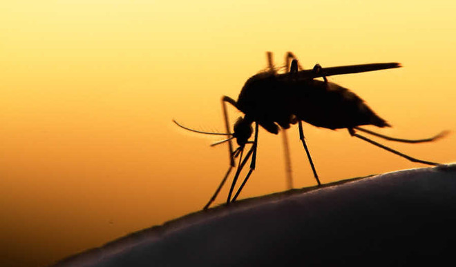 Microsoft, Google Join Hands To Fight Mosquitoes