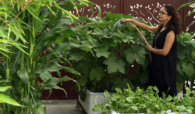 How To Be An Urban Farmer