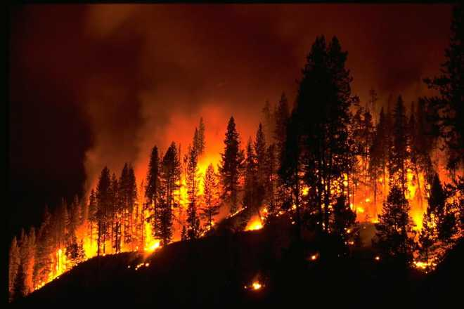 Why Are Wildfires So Common? Discuss.