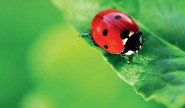 Do You Know This About Ladybird Bugs
