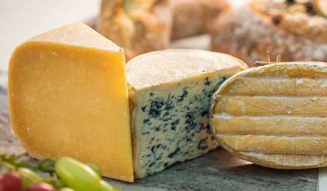 Cheddar Cheese Can Extend Lifespan